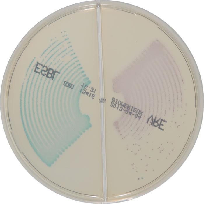 E. faecalis E. faecium