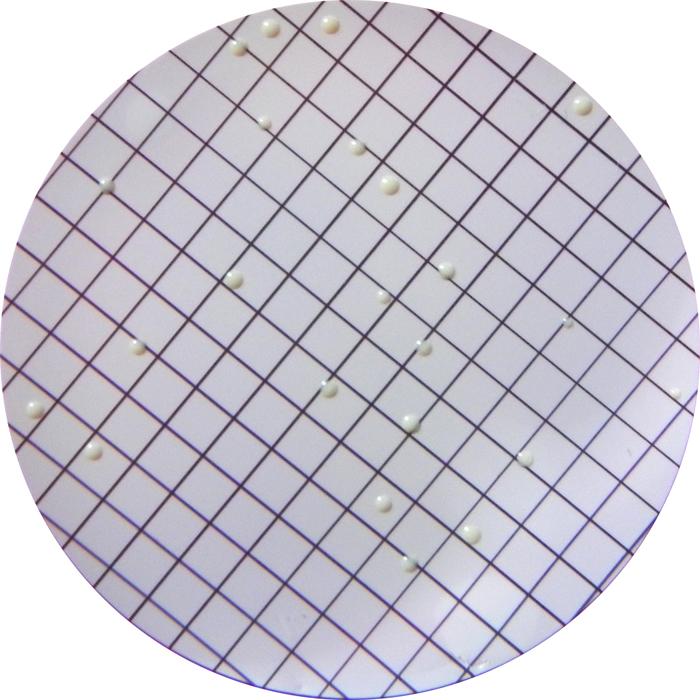 Mannitol Salt agar  (Chapman)